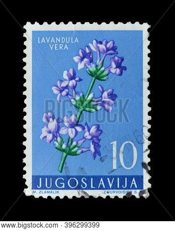 Yugoslavia - Circa 1959 : Cancelled Postage Stamp Printed By Yugoslavia, That Shows Lavender Flower
