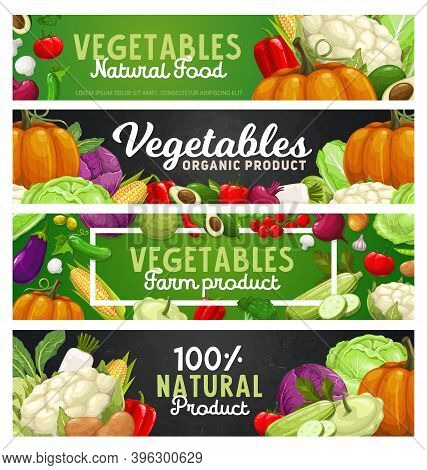 Vegetables And Farm Veggies, Food Harvest Products, Vector Banners. Natural Organic Bio Vegetables,