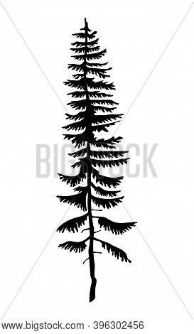 Black Silhouette Of Fir-tree. Hight Black Pine. Simple Tree Icon. Nature Concept. Pine Tree With Nee