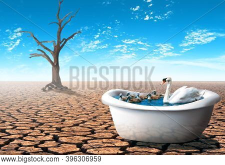 Swan With Her Babies Inside A Bathtub In A Dry Desert. Conceptual Theme Of Global Economic Crisis Du