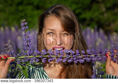 Gorgeous Beautiful Girl Bites Lupine Stem Sensually Looking At Camera On Blooming Meadow, Merging Wi
