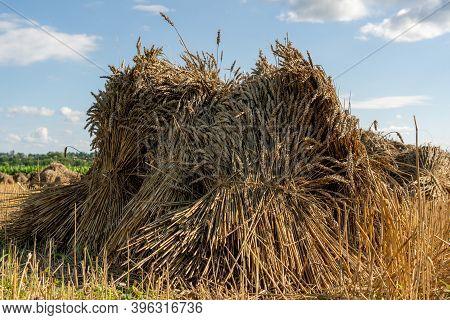 A Sheaf Of Golden Wheat Sitting In A Field.