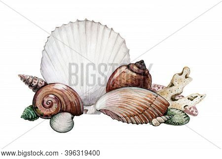 Seashells And Corals Watercolor Illustration. Exotic Marine Natural Shells From The Sea. Group Of Sh