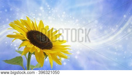Sunflower Surprise Sparkling Message Background - Large Yellow Sunflower Head On Left With With A St