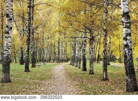 Walking Path In Birch Park In Golden Autumn Season