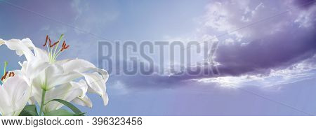 White Lilies Sky Message Banner - Two Lily Heads In Left Foreground Against Fluffy Clouds And Romant