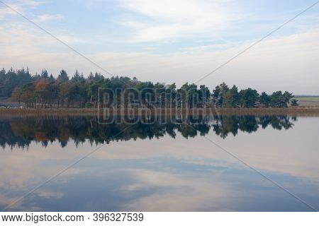 Autumn Season Coniferous Forest Reflected Over Still Water Of Redmires Reservoirs. Wispy Cloudscape