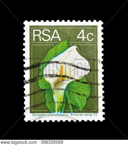 South Africa - Circa 1974 : Cancelled Postage Stamp Printed By South Africa, That Shows Calla Lily (
