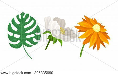 Tropical Flora With Green Monstera Leaves And Flower Buds Vector Set