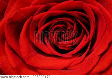 Valentine day Red Rose macro classic beautiful background