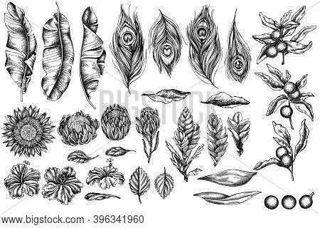 Vector Set Of Hand Drawn Black And White Banana Palm Leaves, Hibiscus, Solanum, Bromeliad, Peacock F
