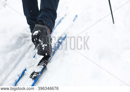Feet Of A Skier In Ski Boots On Cross-country Skis. Walking In The Snow, Winter Sports, Healthy Life