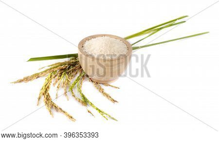 Organic Paddy Rice,ear Of Paddy, Ears Of Thai Jasmine Rice Isolated On White Background