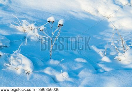 Winter landscape, fields winter plants covered with frost and snow, winter snowy field nature with field winter plants, winter natural landscape