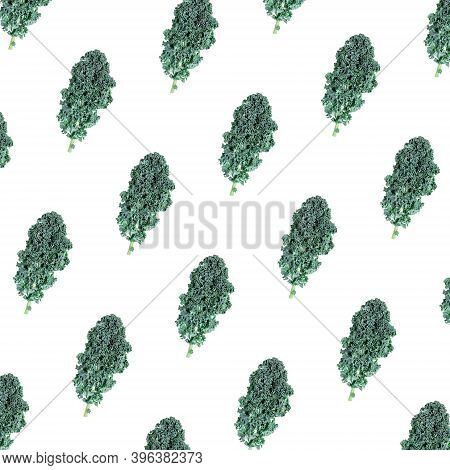 Seamless Pattern With Curly Kale Leaf On White. Superfood