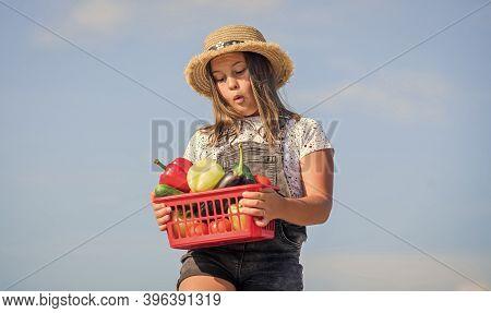 Crops Harvest. Vegetables In Basket. Girl Adorable Child Farming. Harvest Season. Natural Vitamin Nu