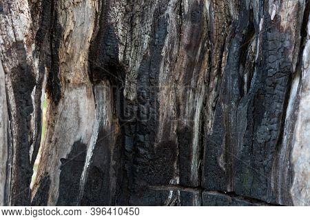 Burnt Wood Texture. Charcoal Texture. Burnt Wood Pattern.
