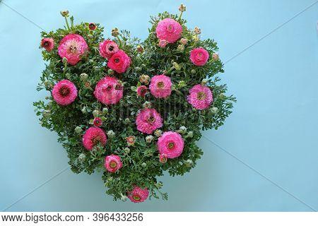 Ranunculus Flower.buttercup Flowers.flower Heart. Ranunculus Flowers Bouquet In The Shape Of A Heart