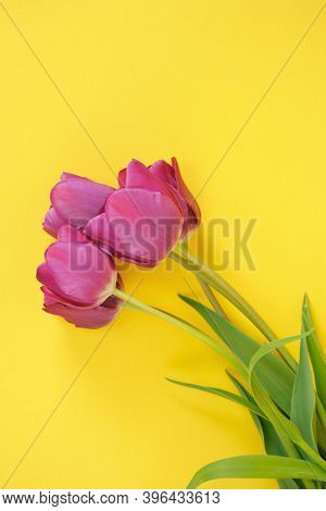 Tulips Flowers. Floral Greeting Card Blank. Three Purple Tulips On A Bright Yellow Background.spring