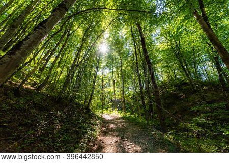 Walking Pathway In Forest Or Park. The Suns Rays Make Their Way Through The Foliage.