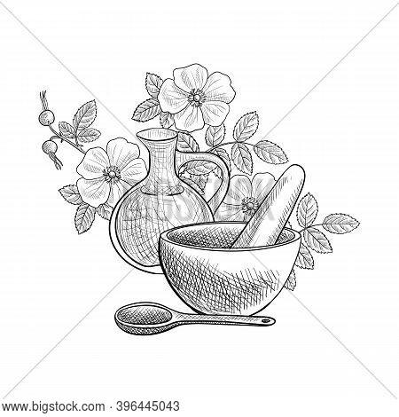 Vector Drawing Cinnamon Rose , Rosa Majalis Flowers, Berries And Leaves, Jug, Mortar And Pestle At W