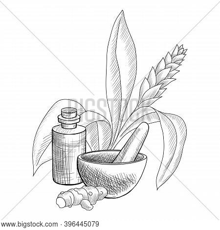 Vector Drawing Turmeric Essential Oil, Curcuma Longa Plant And Root, Bottle, Mortar And Pestle, Hand