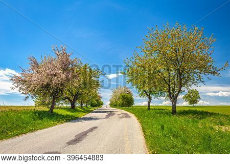 A Path Through A Tree Alley In The Countryside During A Sunny Day In The Spring.