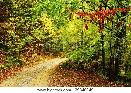 Forest autumn landscape