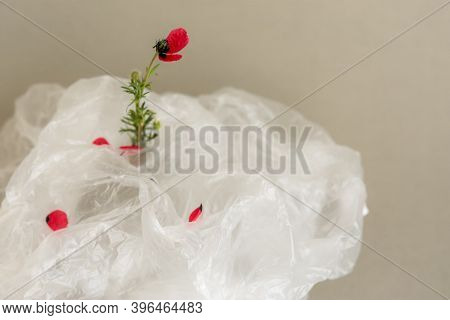 Flower In A Plastic Bag. The Concept Of Environmental Protection. World Environment Day, Recycling O