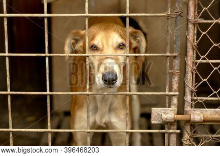 Portrait Of A Stray Dog In A Grungy Dog Shelter.