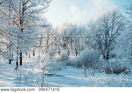 Winter landscape, winter forest trees covered with frost and snow, sunrise in the winter forest. Winter background with forest winter trees, winter forest sunrise landscape, winter forest nature