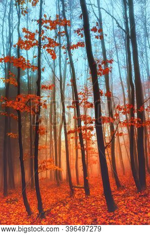 Beautiful Colorful Autumn Forest, Fantasy Moody Forest Trees In Cold Foggy Morning.