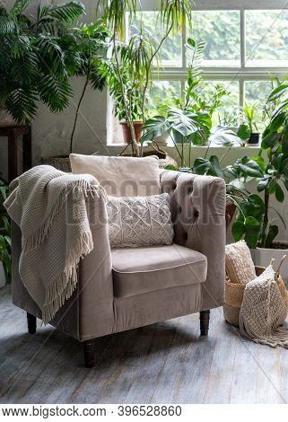 Cozy Living Room With Plaid And Cushion On Comfortable Armchair Against Green Houseplants In Flower