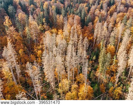 Fall Forest Landscape View From Above.colorful Nature Background.autumn Forest Aerial Drone View.idy