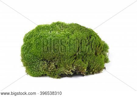 Mossy Moss Stone Isolated On White Background. High Resolution Photo. Full Depth Of Field.