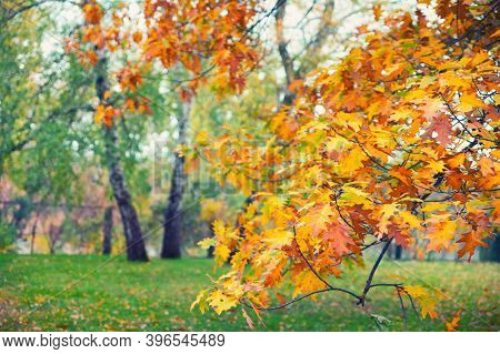 Close Up Of Colorful Autumn Leaves On Tree