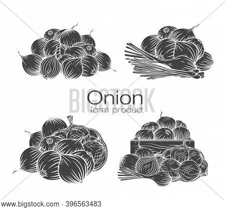 Onion Bulbs Glyph Outline Hand-drawn Engraved Monochrome Vector Illustration Set Isolated White On B