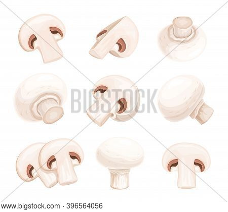 Whole And Cut Into Slices Edible Champignon Mushrooms Isolated Vector Illustration. Organic Vegan Fo