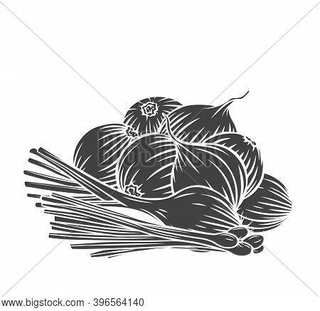 Onion Bulbs, Scallion, Leek Glyph Engraved Monochrome Vector Illustration In Retro Style. Bunch Of O