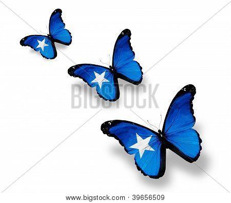 Three Somalian Flag Butterflies, Isolated On White