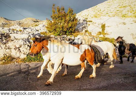 Herd Of Horses Galloping Down A Road In The Mountains, Biokovo, Croatia. Before The Storm