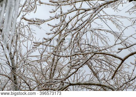 Freezing Rain. Icy Tree Branches After An Icy Rain. Natural Disaster. Selective Focus.