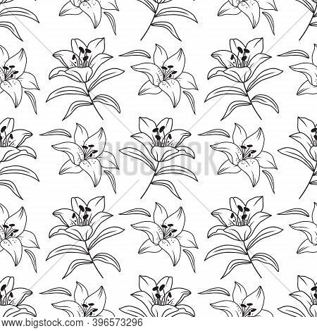 Lily Seamless Pattern, Elegant Lilies Drawn By A Thin Line. Floral Pattern Black And White. Vector I