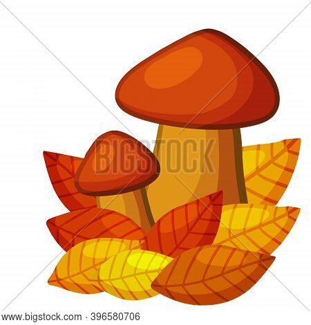 Mushrooms. Autumn Element Of Forest And Nature. Natural Food. Large And Small Cep. Red And Orange Le