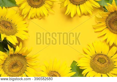 Frame From Beautiful Sunflowers Floral Card. Creative Background With Yellow Sunflowers, Green Leave