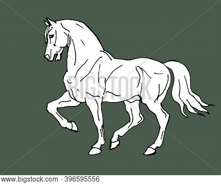Hand Drawn, Prancing White Horse In Antique Style Isolated On Green Background