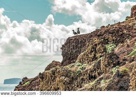 Two Birds Sitting On Rocky Cliffs Clear Water Of Atlantic Ocean At Ponta De Sao Lourenco, The Island