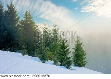Fog On A Sunny Winter Morning. Spruce Trees Among The Glowing Mist. Beautiful Scenery In Mountains.