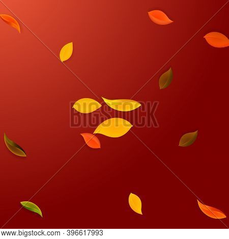 Falling Autumn Leaves. Red, Yellow, Green, Brown Neat Leaves Flying. Explosion Colorful Foliage On W