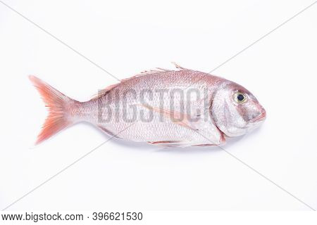 Red Snapper Fish Isolated On White Background. Top View.